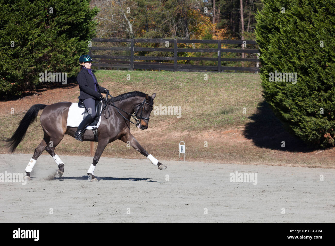 Woman riding dressage horse at extended trot - Stock Image