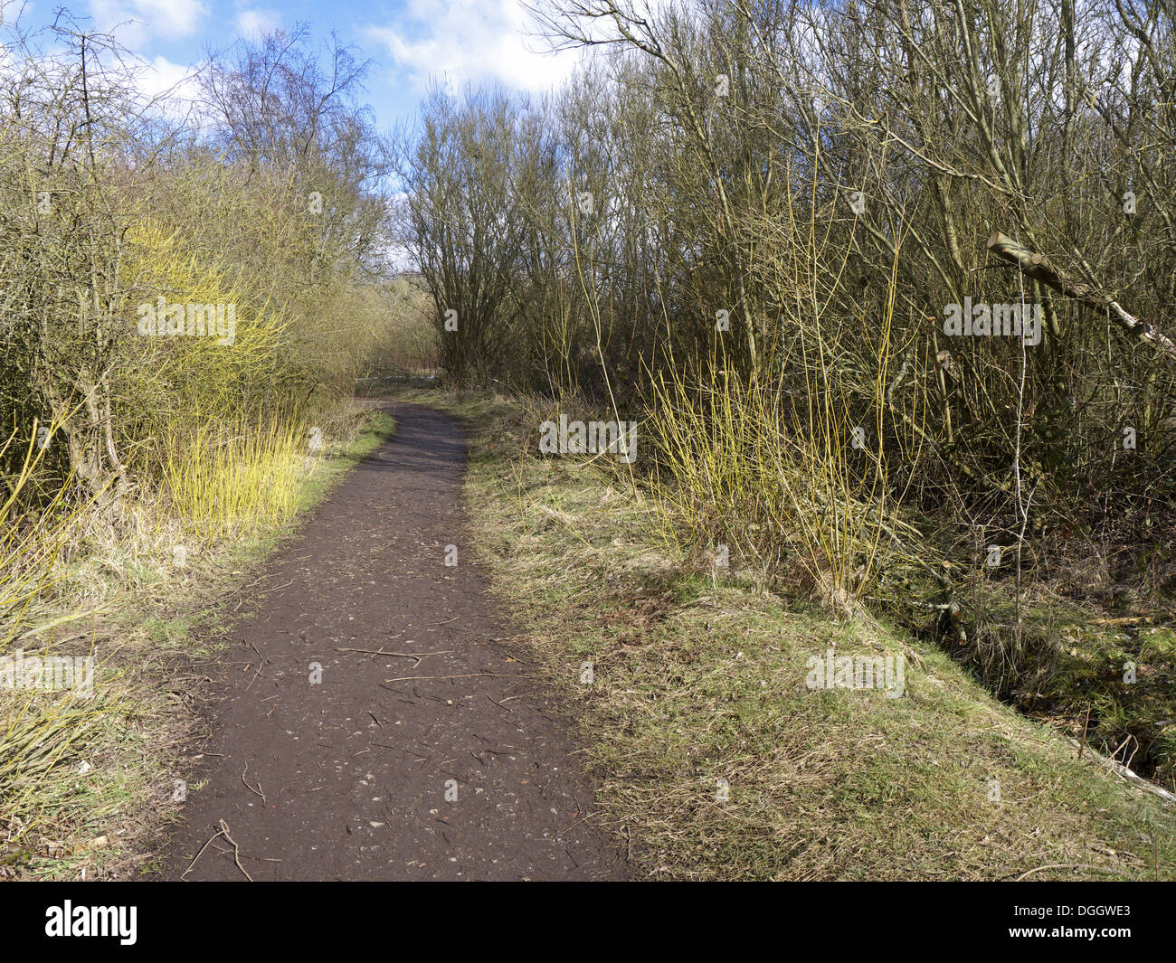 Path through deciduous woodland habitat, Sandwell Valley RSPB Reserve, West Midlands, England, April - Stock Image