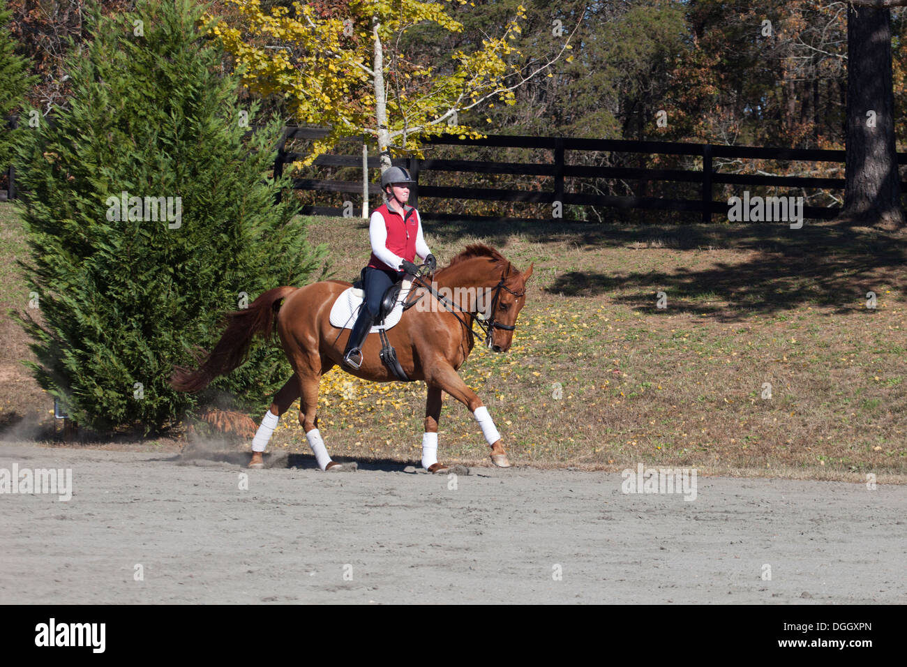 Woman riding chestnut dressage horse - Stock Image