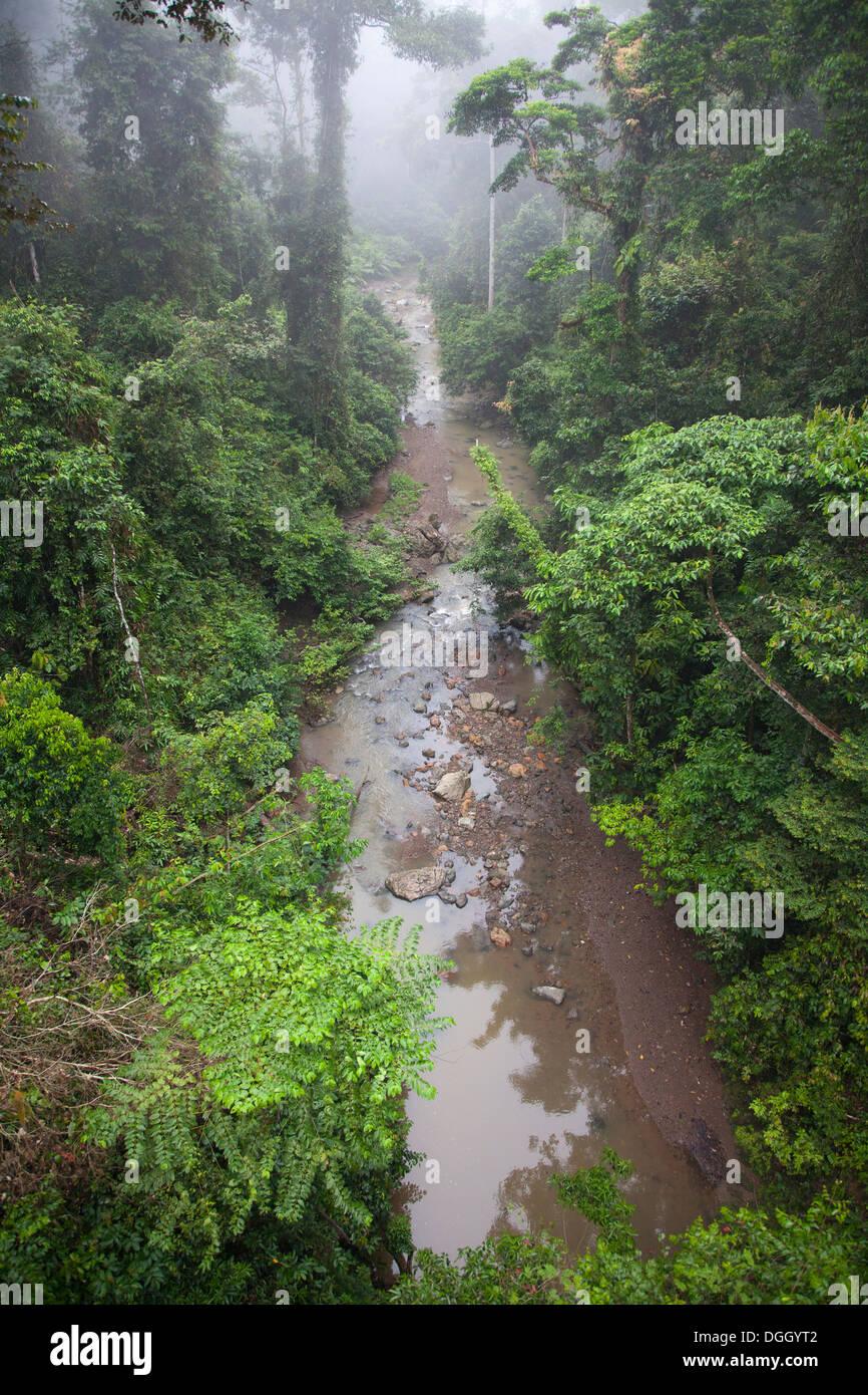 Stream flowing through Dipterocarp tropical lowland rainforest - Stock Image