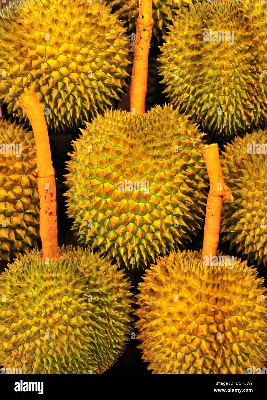 Tropical fruit - Expensive Thai Durian Stock Photo