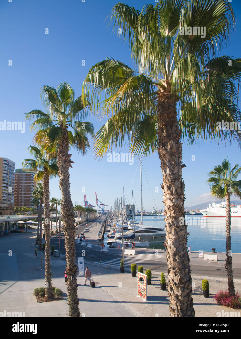 Palm trees in new port development Muelle Uno in Malaga Spain - Stock Image