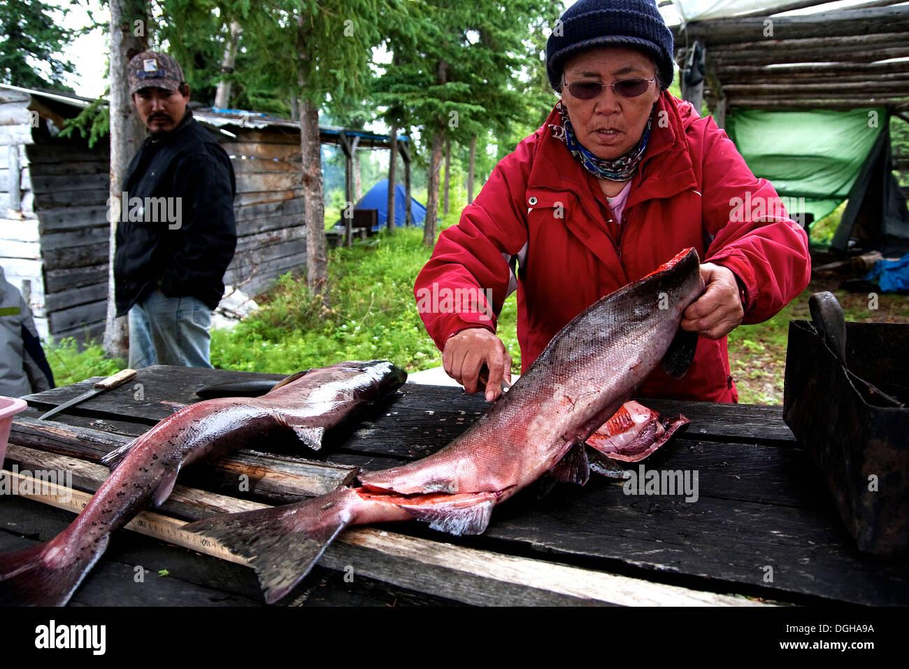 A Native Alaskan family filets freshly caught salmon in Denali National Park Alaska - Stock Image