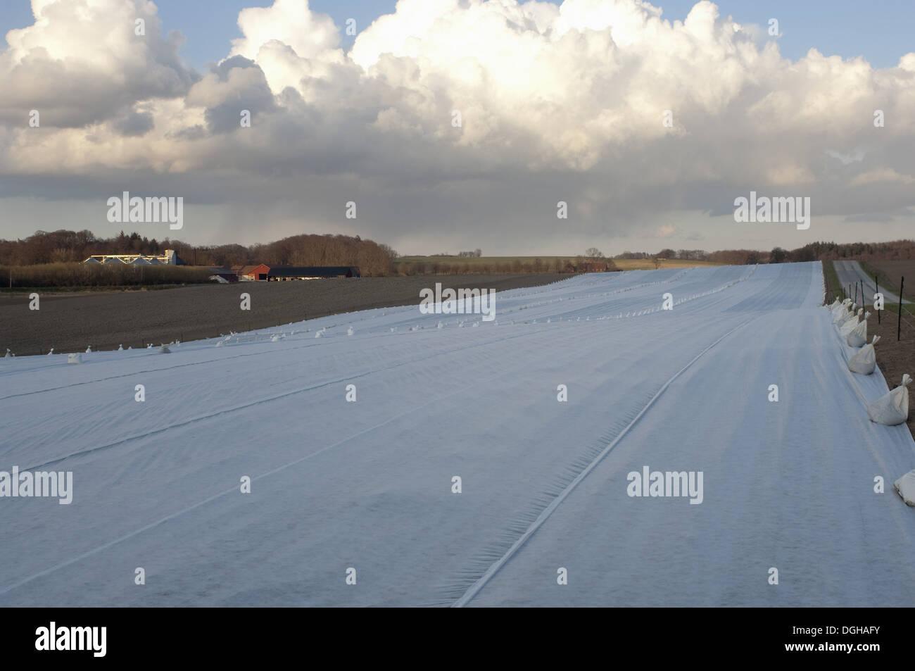 Arable fields covered with felt, Skane, Sweden, spring - Stock Image