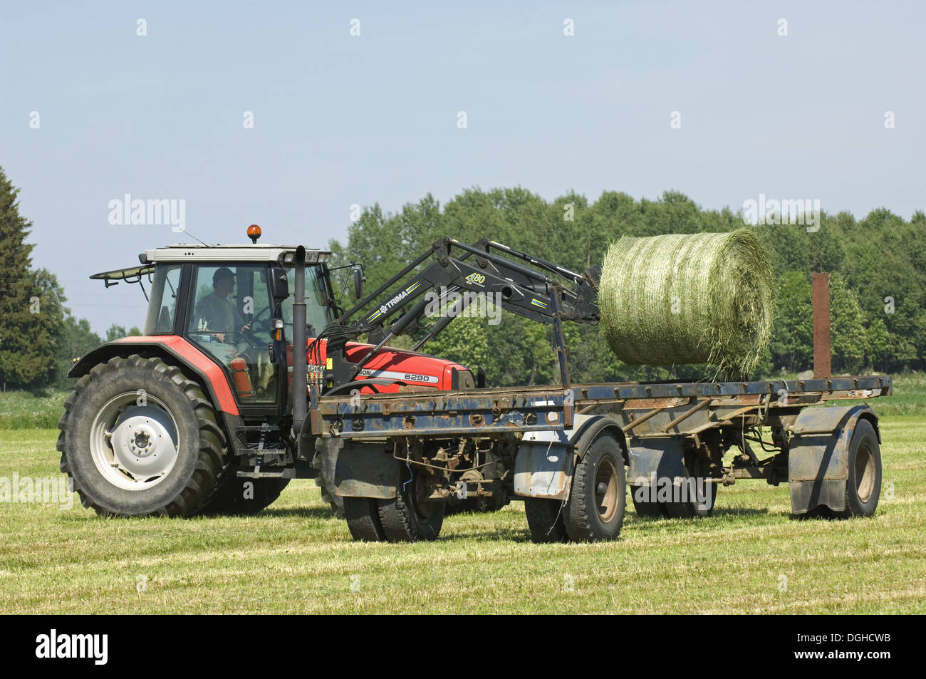 Round silage bales, loaded onto trailer by Massey Ferguson 6290 tractor with front loader, Sweden Stock Photo