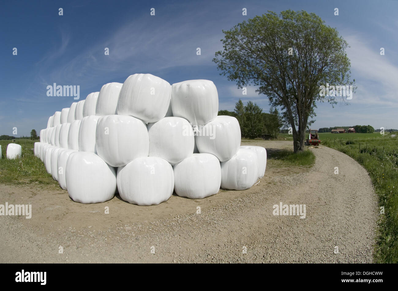 Plastic wrapped round silage bales, stacked at edge of farm track, Sweden - Stock Image