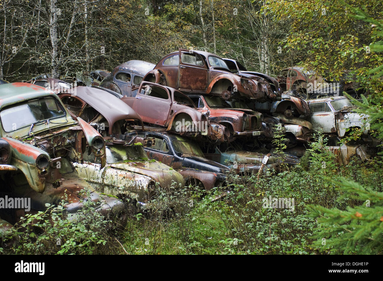 Pile of scrap cars in forest, Sweden - Stock Image