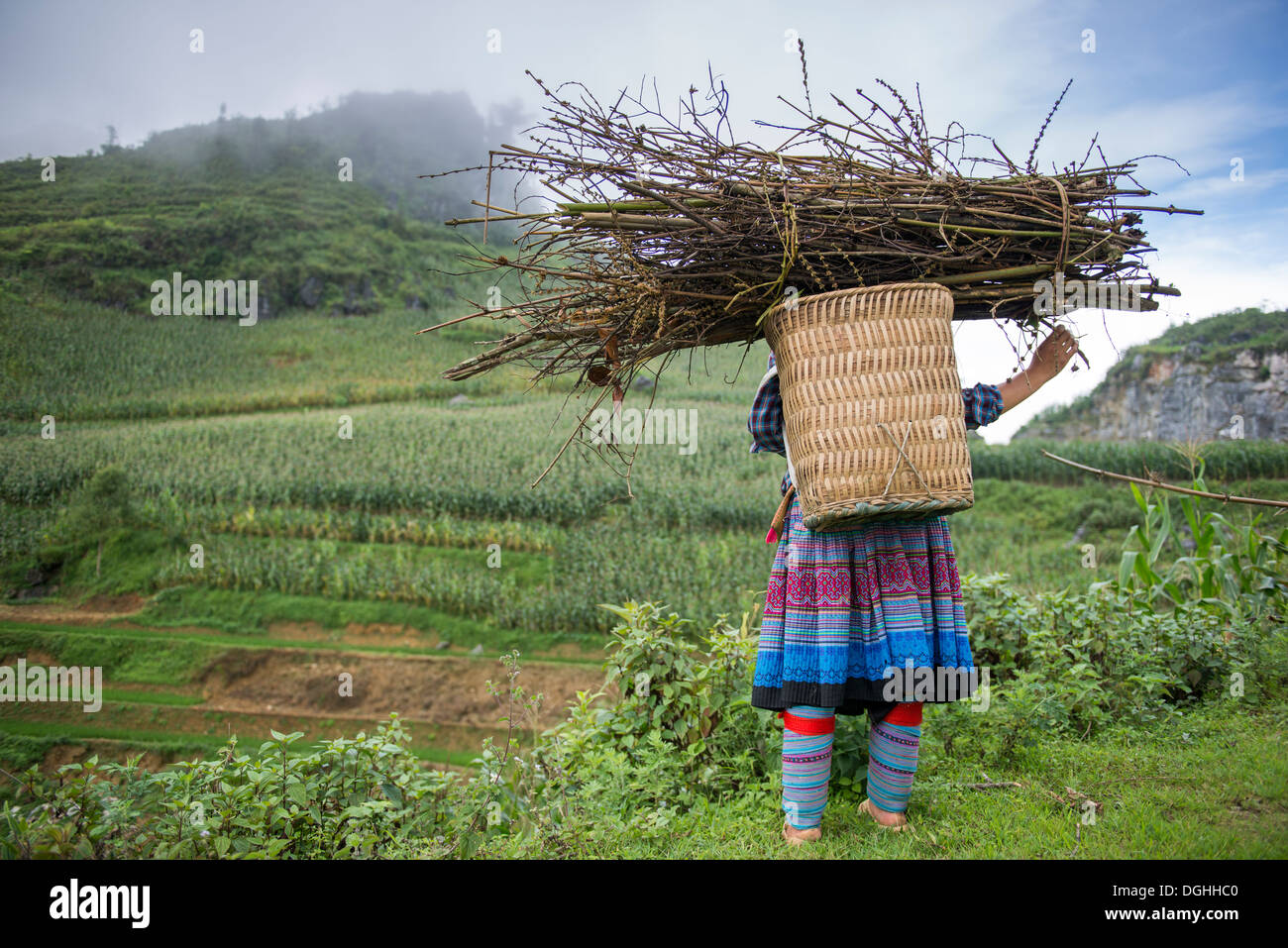 Flower Hmong woman carry the firewood on the back, Bac Ha, Lao Cai, Vietnam - Stock Image