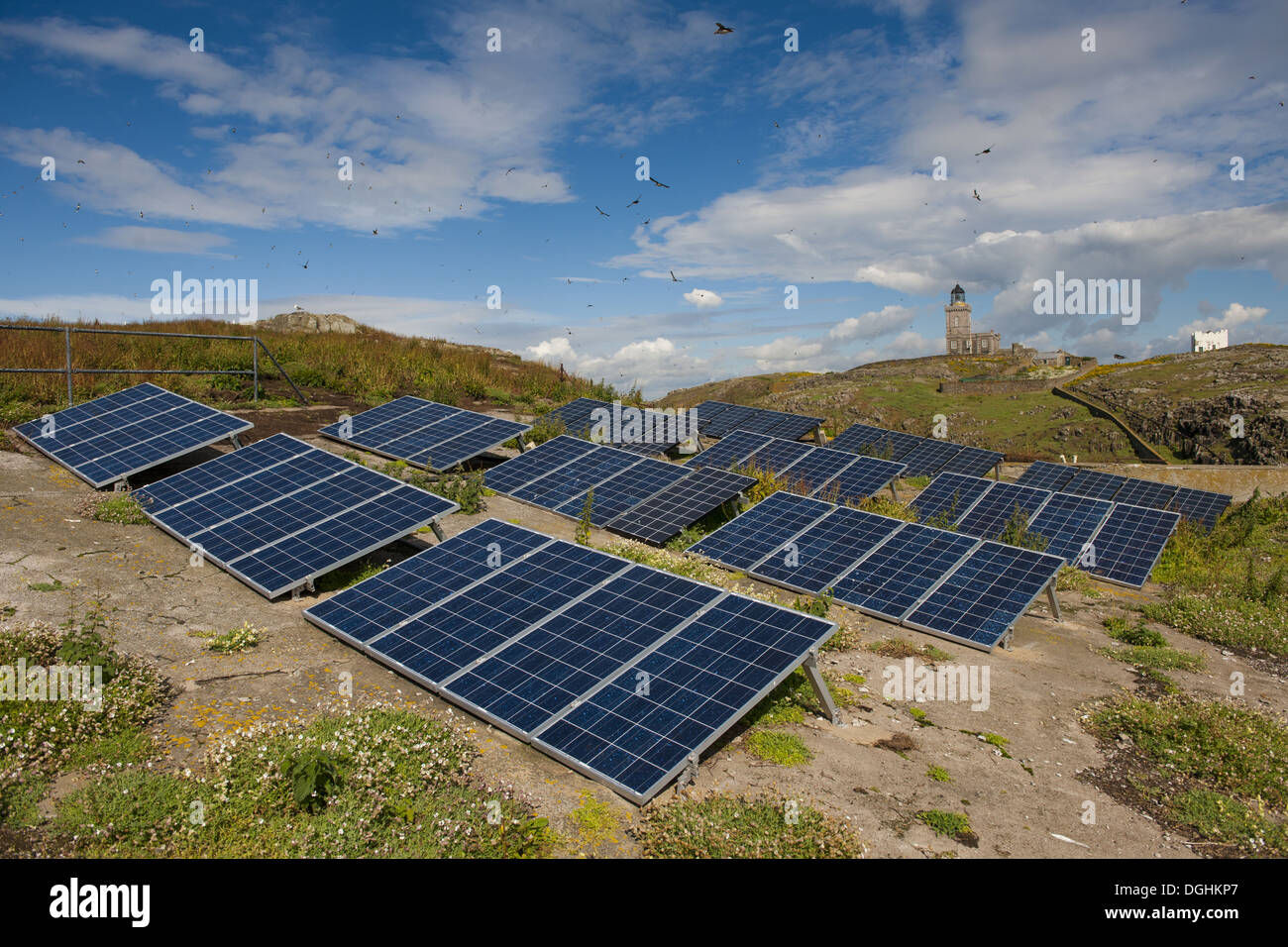 Solar panels gererating electricity to power lighthouse with Atlantic Puffin (Fratercula arctica) flock in flight Stevenson's - Stock Image
