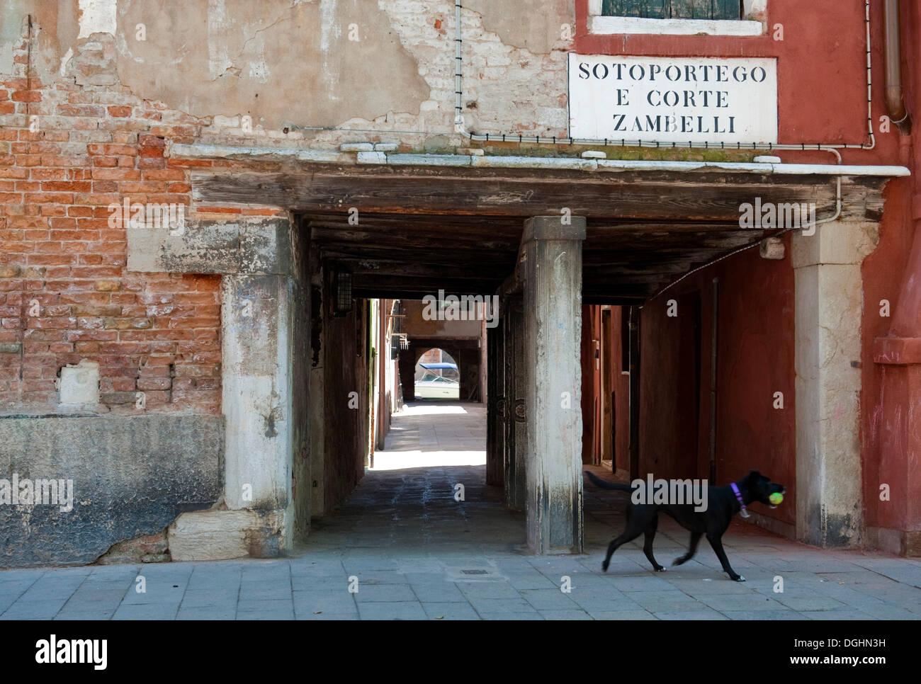 Dog in front of the passage Sotoportego e Corte Zambelli, at the Campo San Giacomo dall'Orio, Venice, Veneto, Italy, Europe - Stock Image