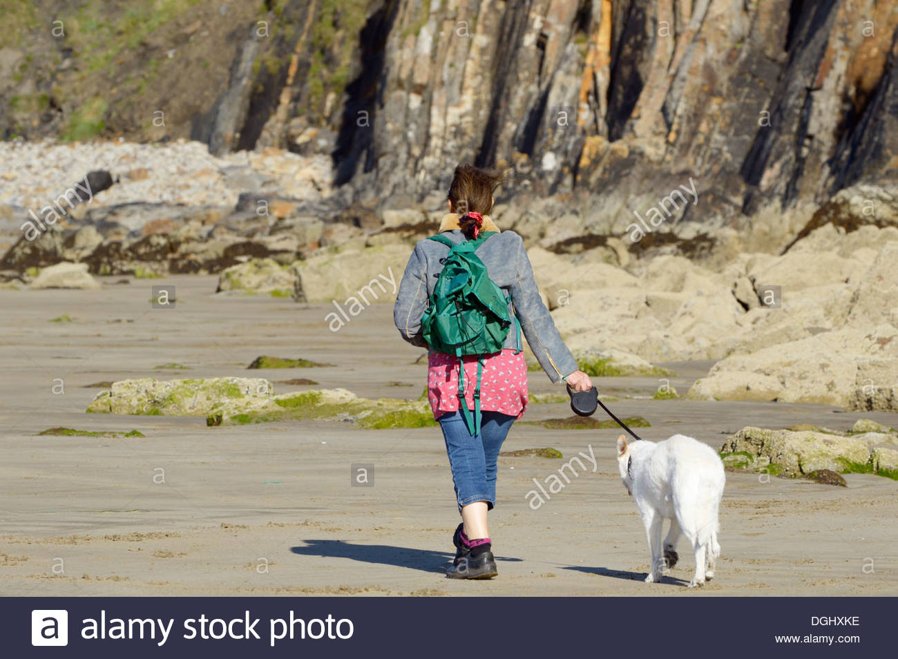 Lone woman walking a dog on a lead on the beach at Little Haven, Pembrokeshire, Wales. - Stock Image