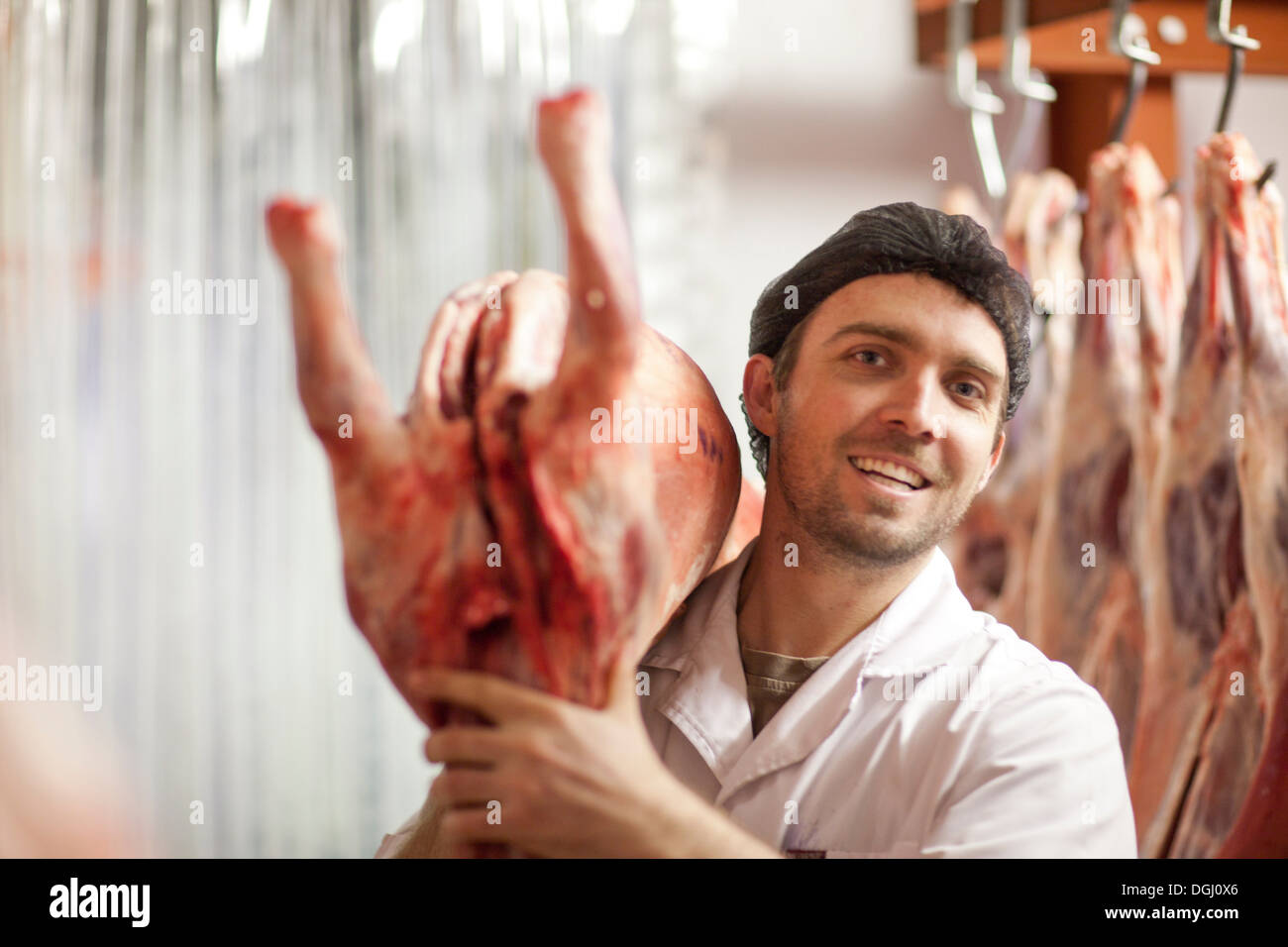 Butcher holding carcass over shoulder - Stock Image