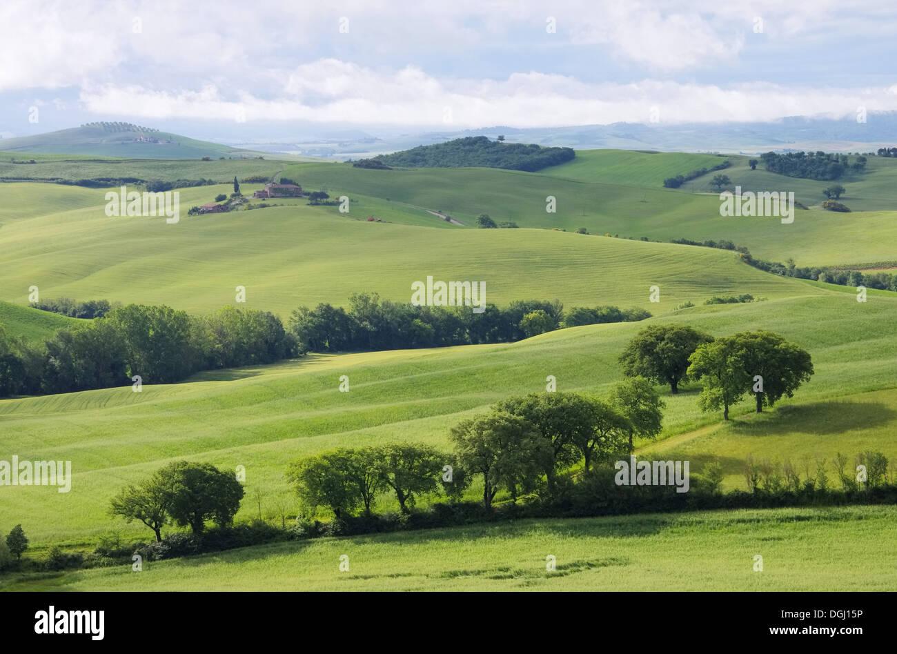 Toskana Huegel - Tuscany hills 60 Stock Photo