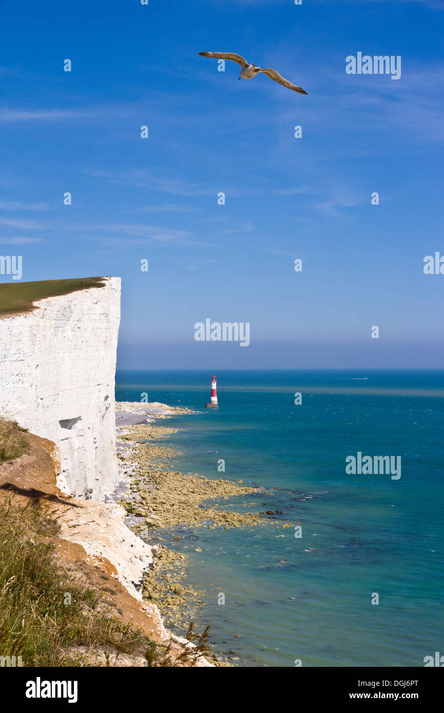 Beachy Head Cliffs and lighthouse with seagull. - Stock Image