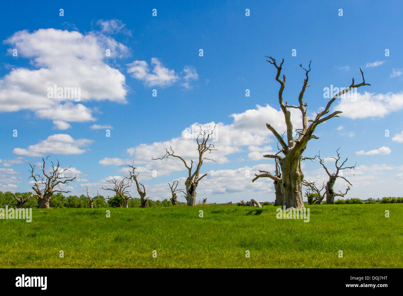 The so called petrified forest at Mundon in Essex. - Stock Image