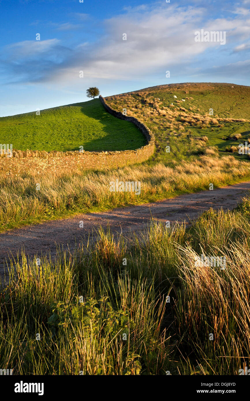 Farm track and drystone wall in the Brecon Beacons National Park. - Stock Image