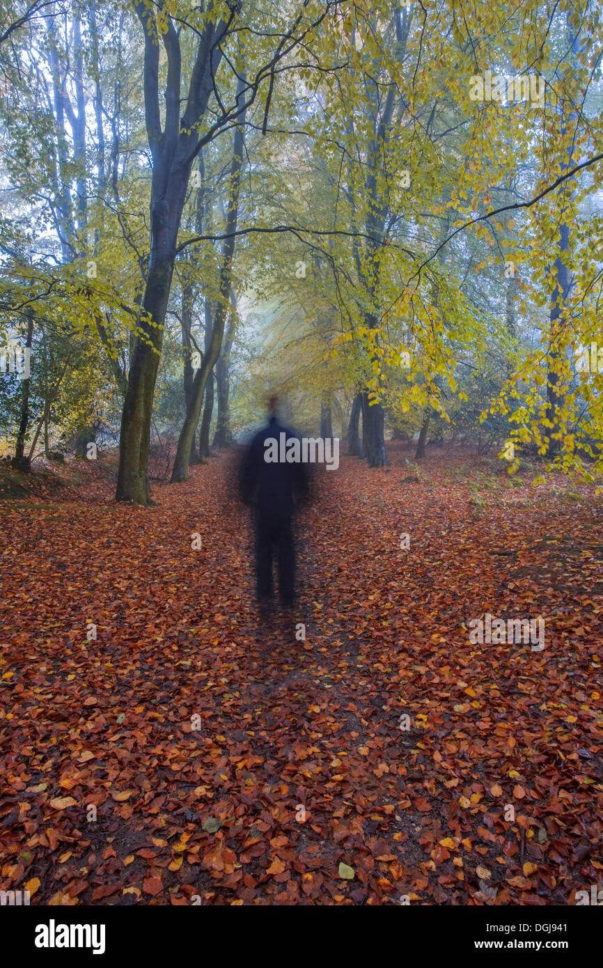 A  man walking through autumn woodland. - Stock Image