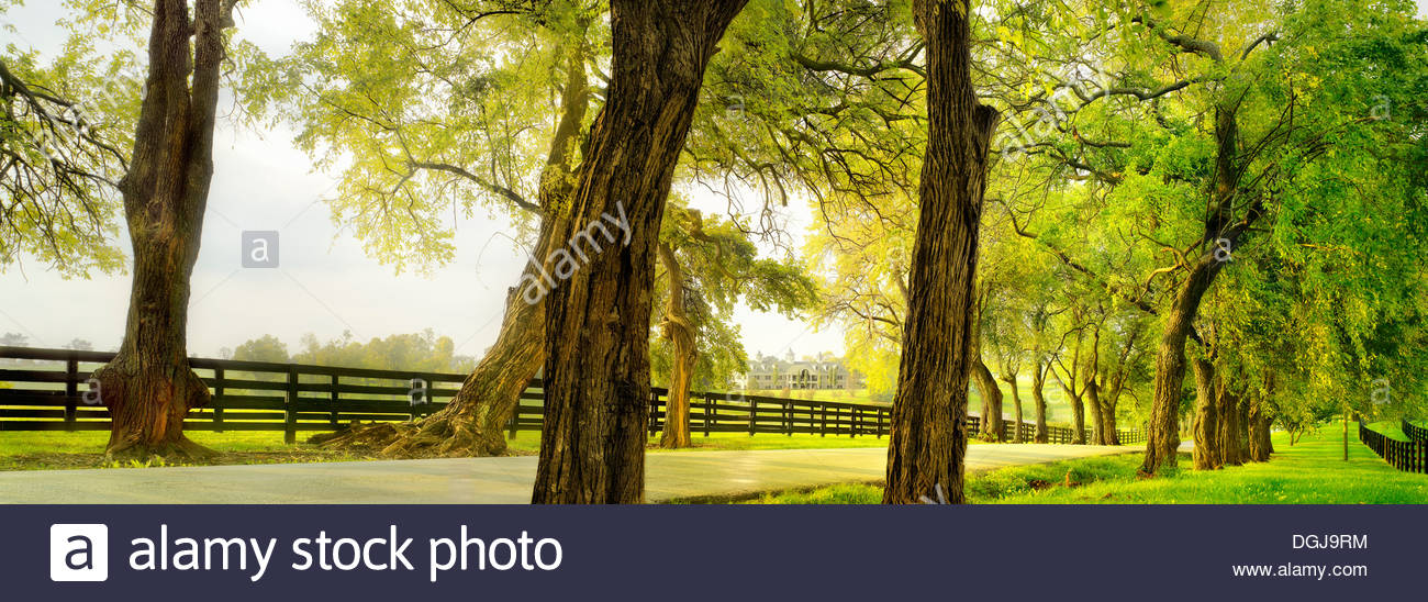 A view toward WinStar Horse Farm which is one of the leading thoroughbred stables in America. - Stock Image
