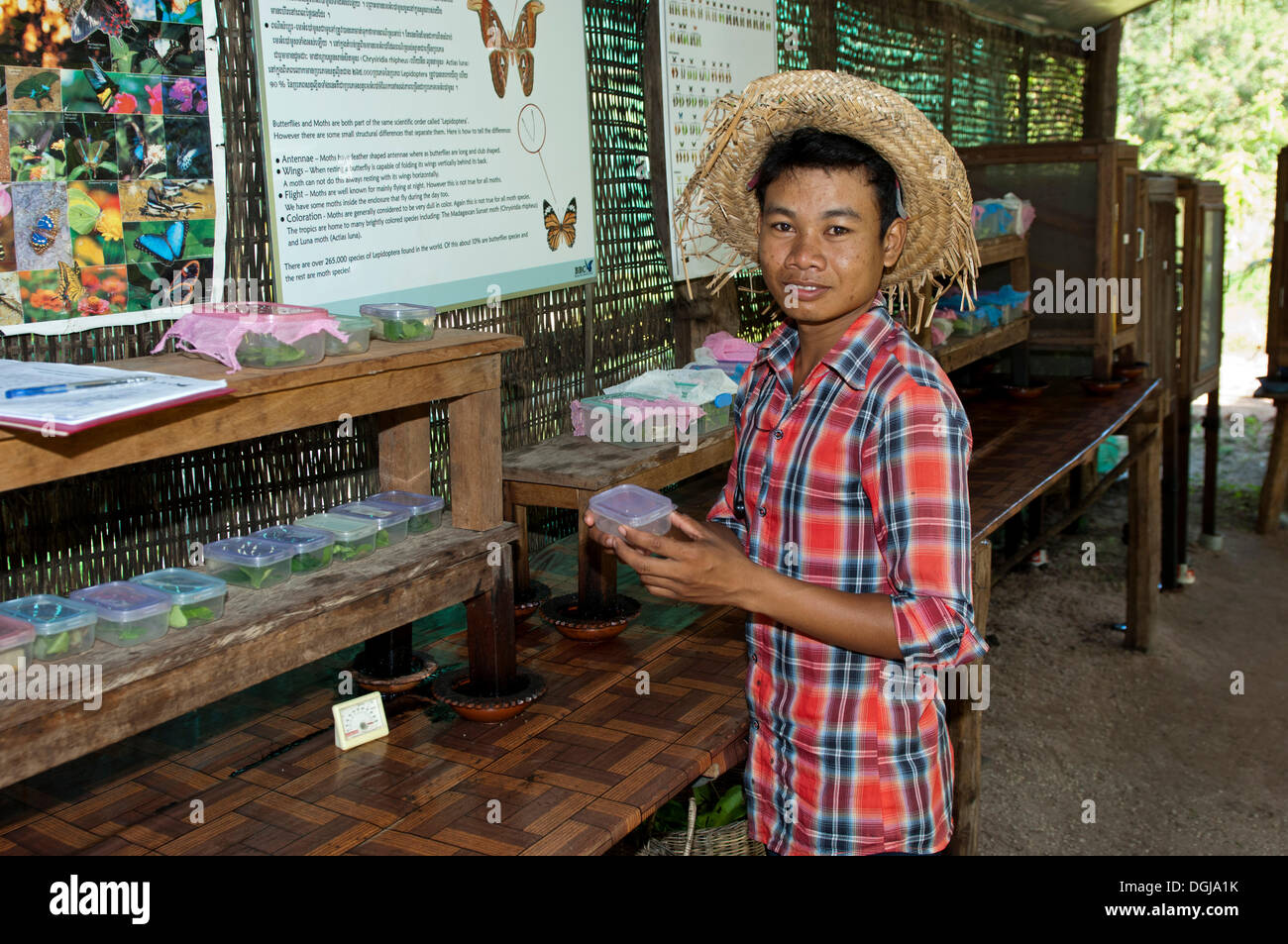 Lepidopterist with plastic boxes for breeding caterpillars in Banteay Srey Butterfly Centre BBC, Siem Reap, Cambodia - Stock Image