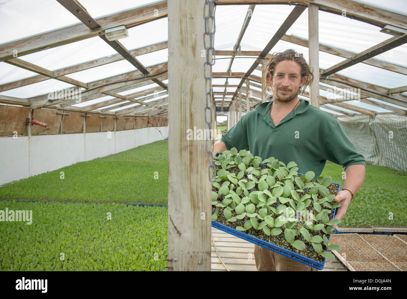 Farmer holding seedlings to plant on organic farm, portrait - Stock Image