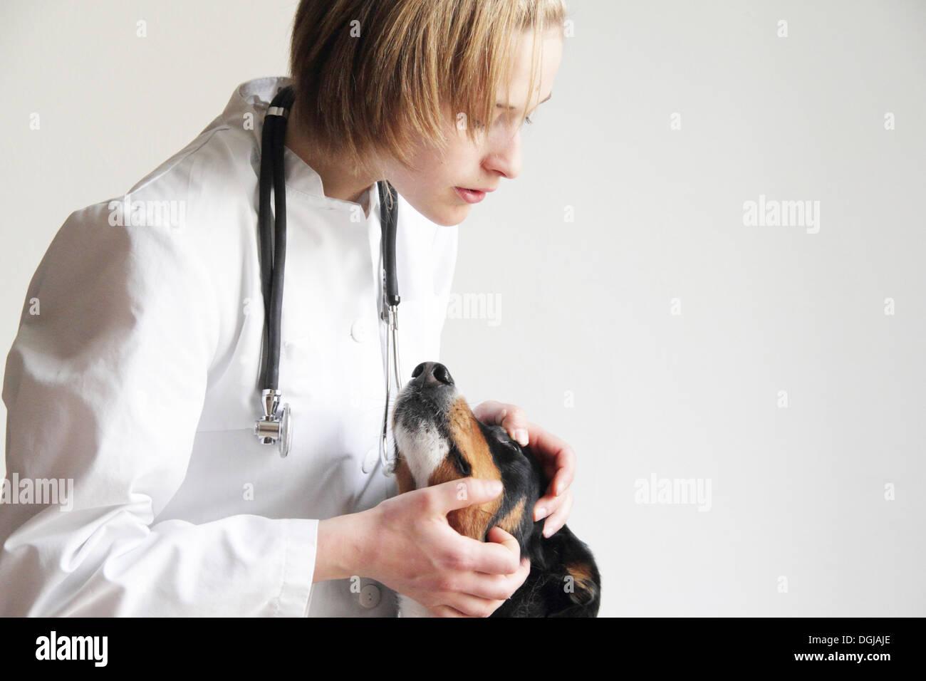 Female veterinarian examining dogs eye - Stock Image