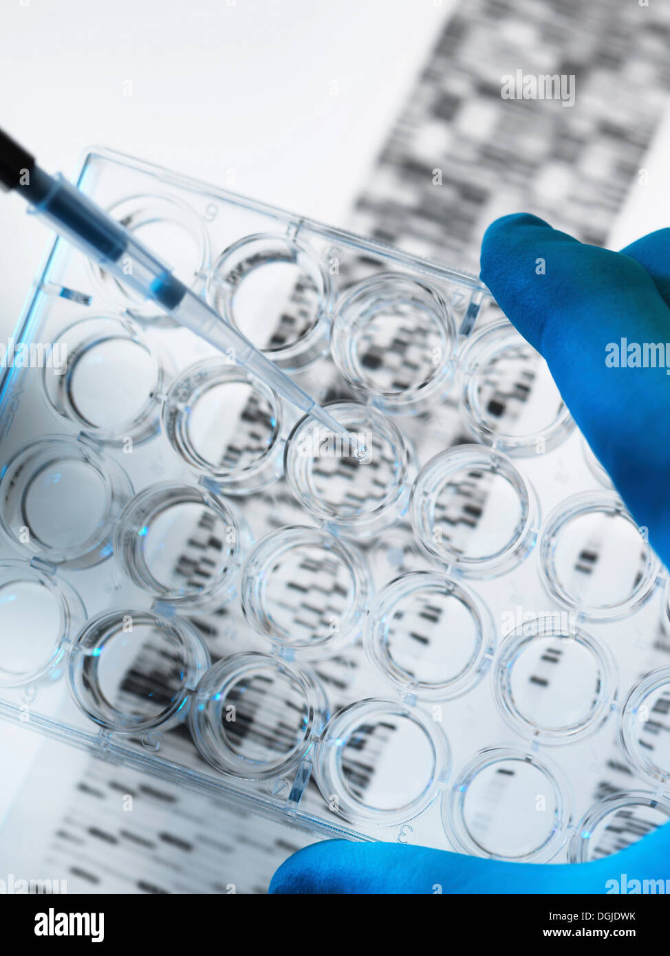 DNA sample being pipetted into multi well plate with DNA gel below - Stock Image