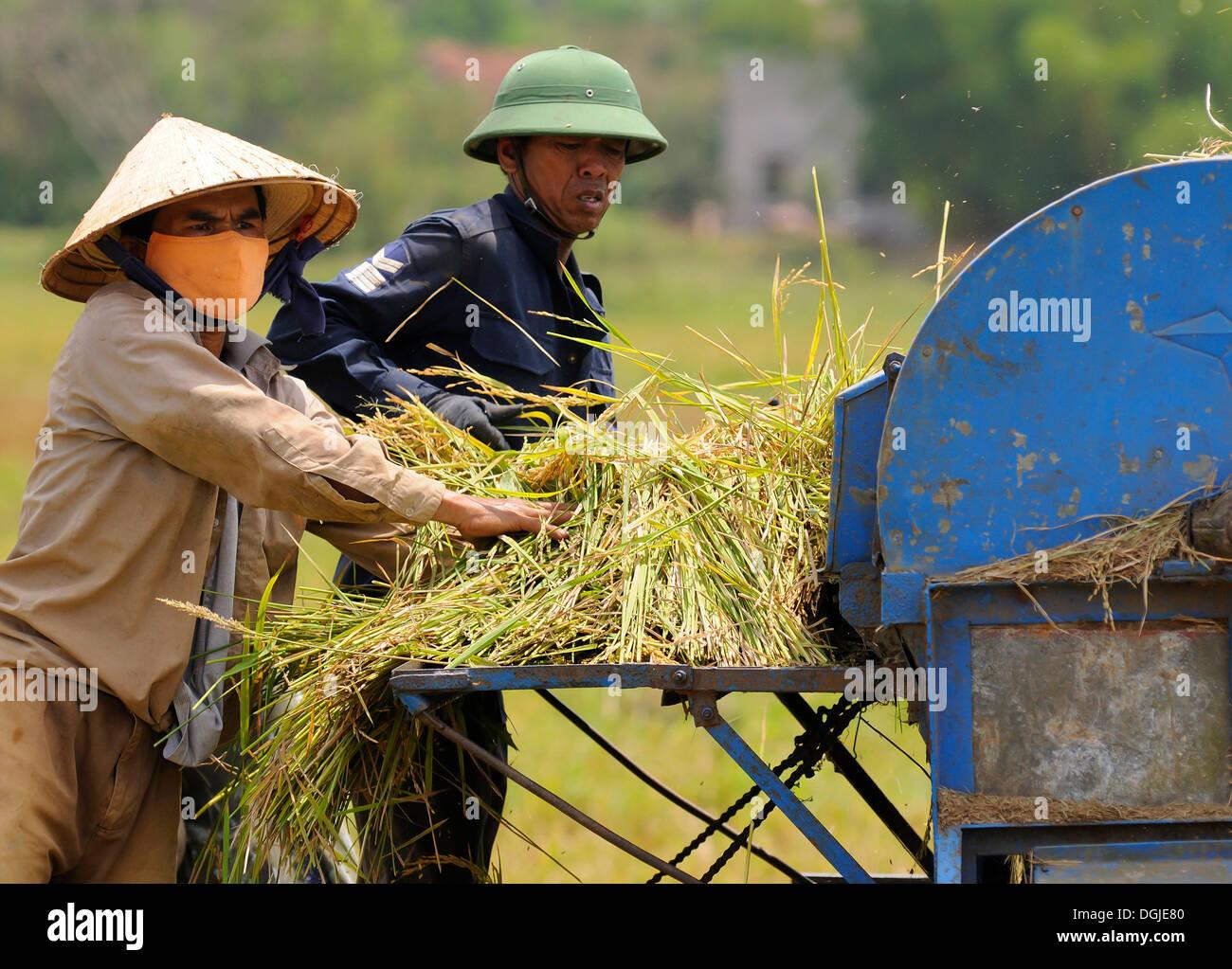 Men with a rice straw threshing machine, Vietnam, Asia - Stock Image