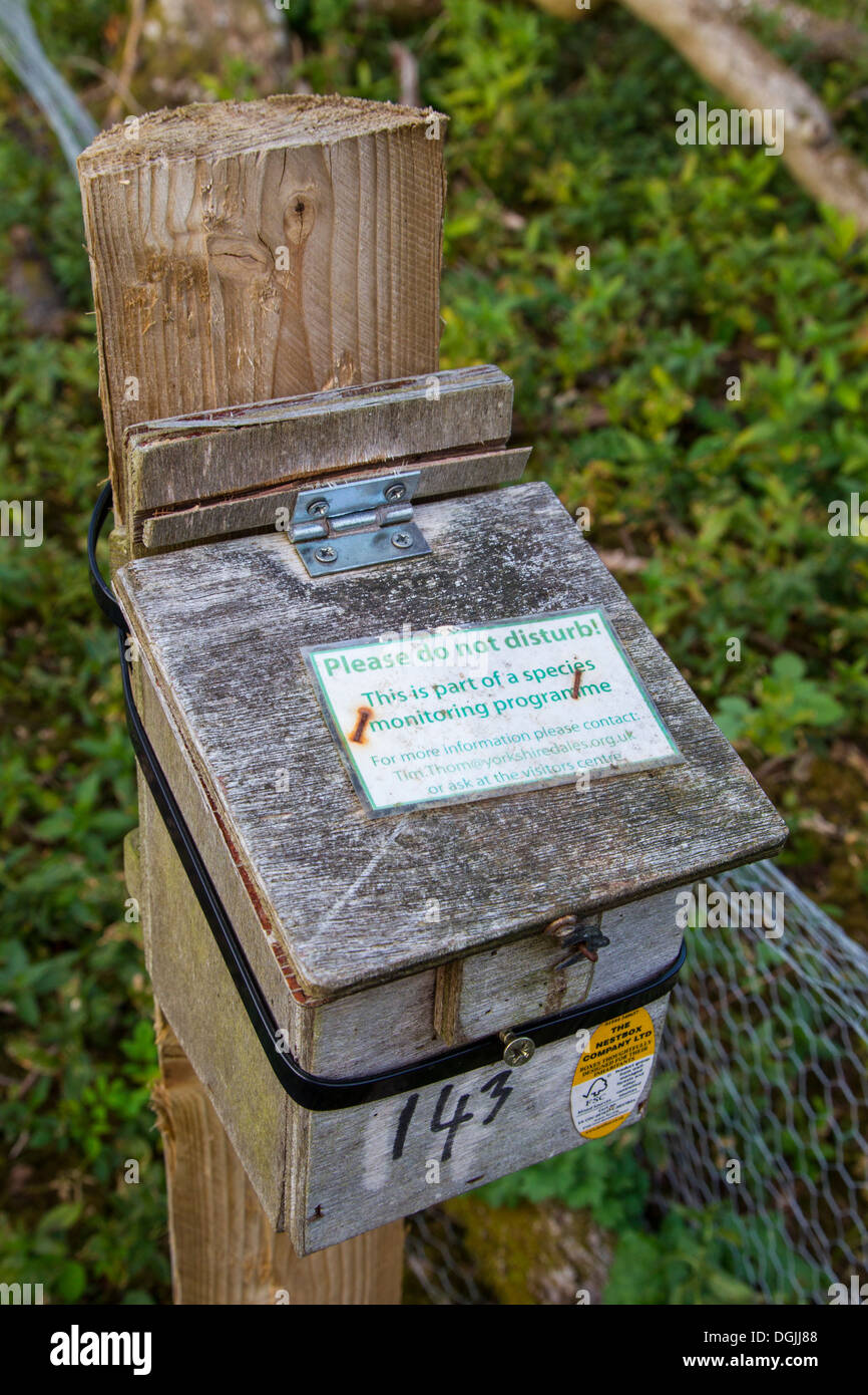 Common Dormouse (Muscardinus avellanarius) man made nest box in Hazel Woodland, Yorkshire Dales, UK - Stock Image
