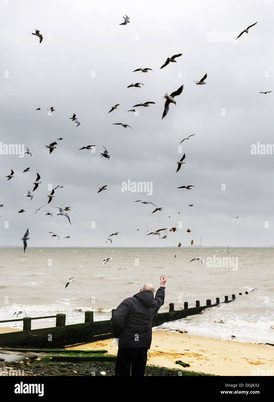 A man feeding seagulls on the seafront at Southend in Essex. - Stock Image