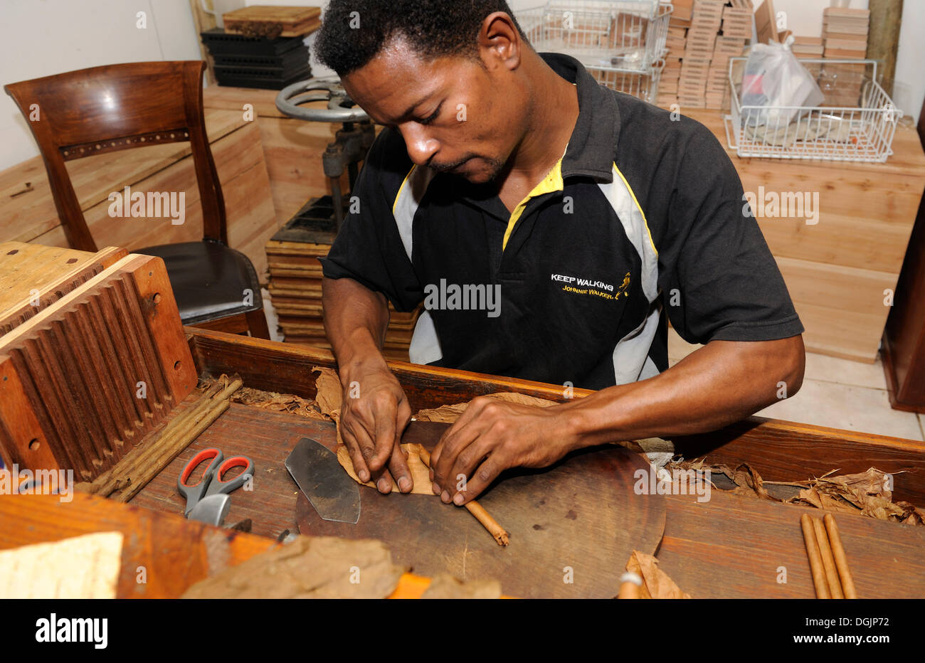 Man rolling a cigar, attaching the wrapper, cigar factory in Punta Cana, Dominican Republic, Caribbean - Stock Image