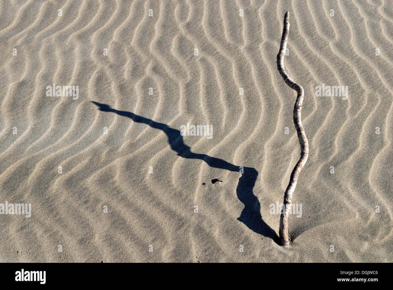 Ripples in the sand, sand structure, Farewell Spit Nature Reserve, Golden Bay, South Island, New Zealand - Stock Image