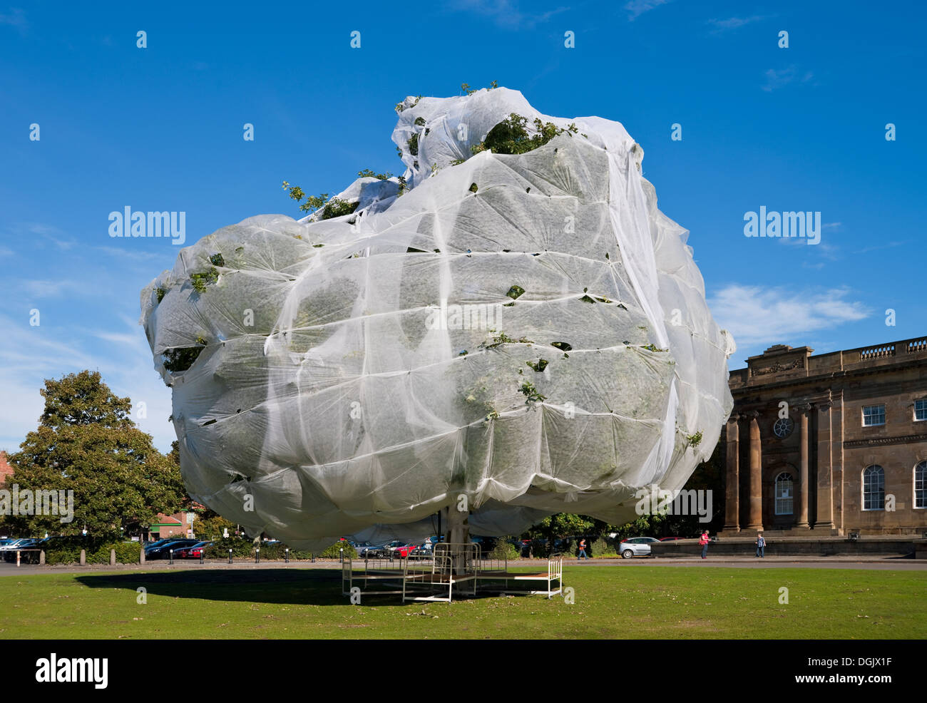 Large tree covered in horticultural fleece to protect it England UK United Kingdom GB Great Britain - Stock Image