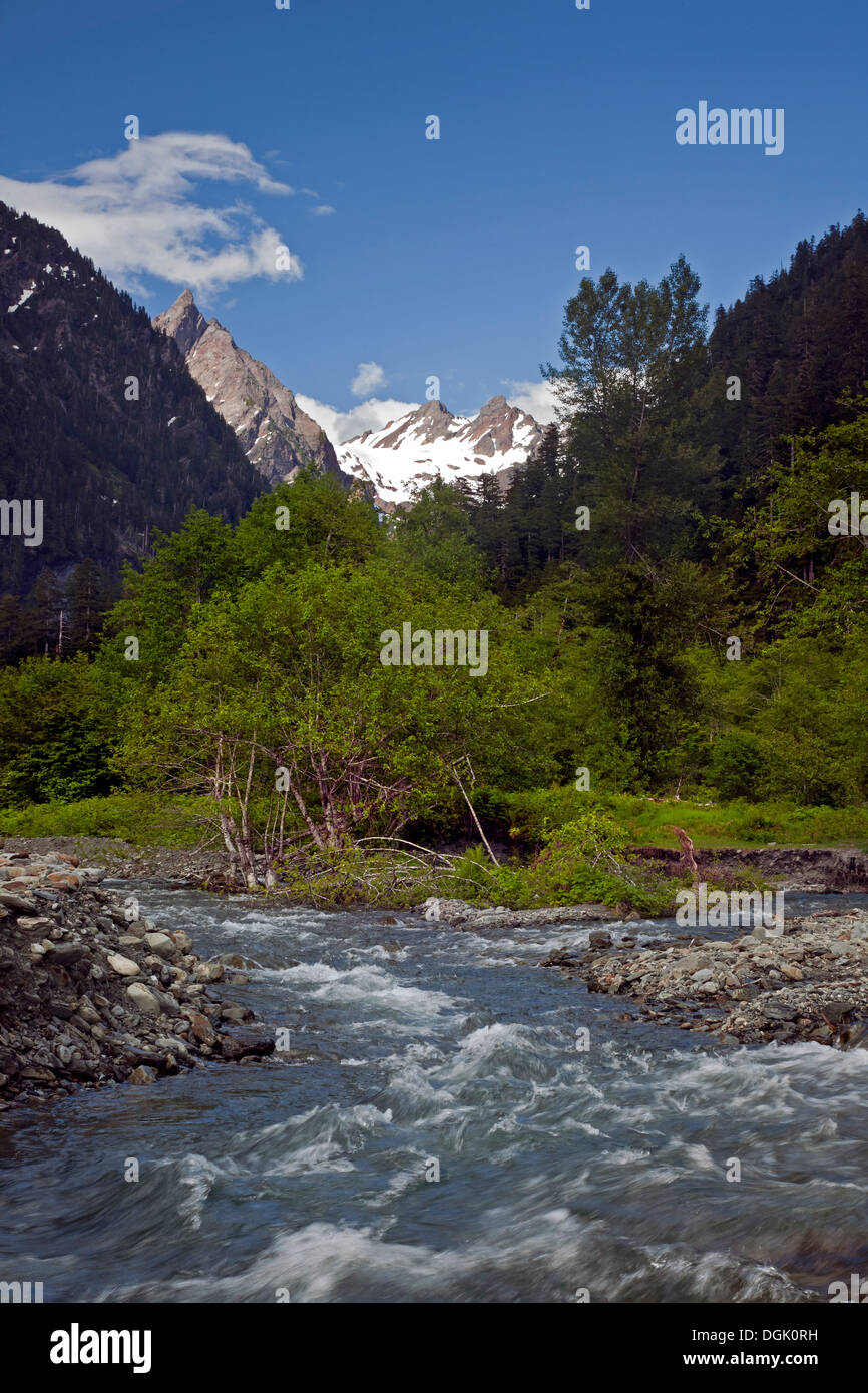 WASHINGTON - The Quinault River in the Enchanted Valley with glaciated Mount Anderson in the distance in Olympic National Park. - Stock Image