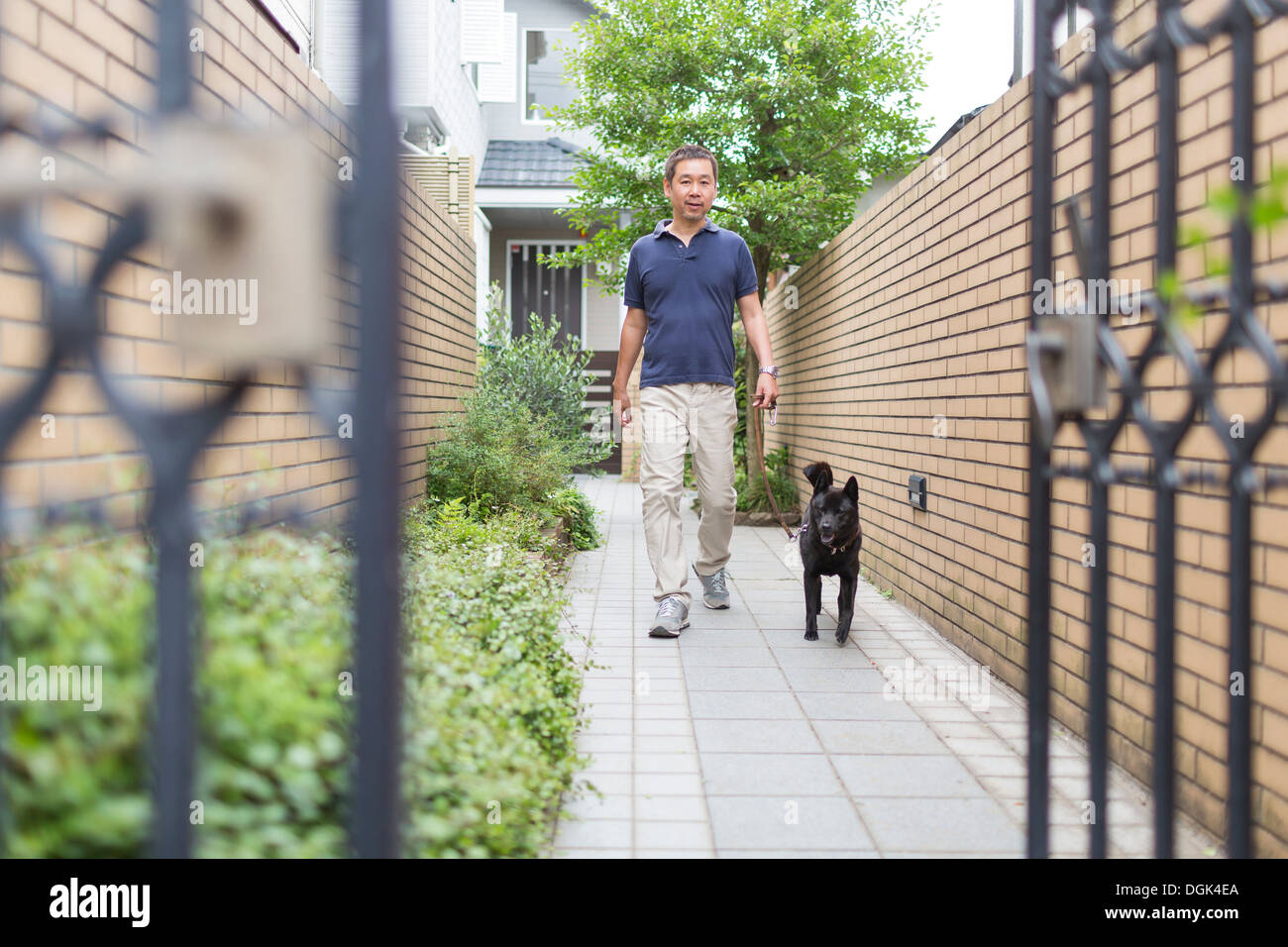 Man walking his pet dog - Stock Image