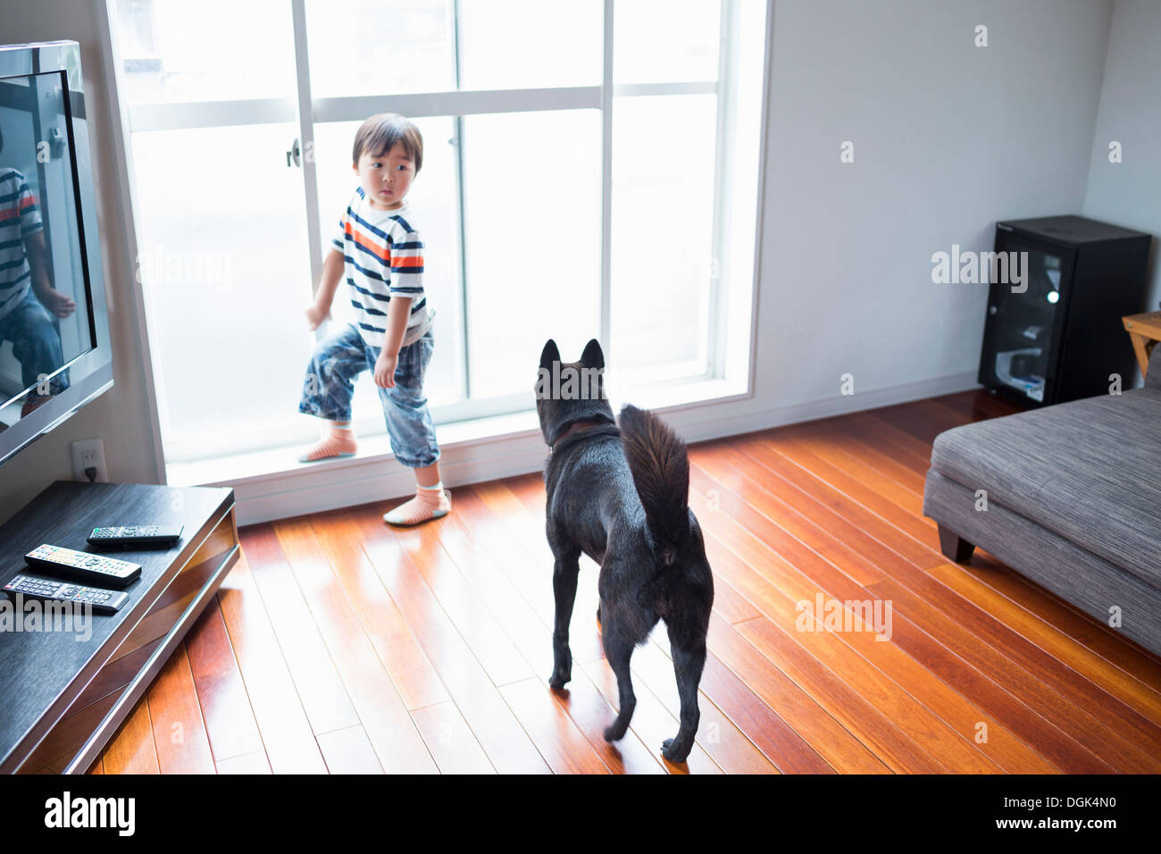 Boy in living room with pet dog - Stock Image