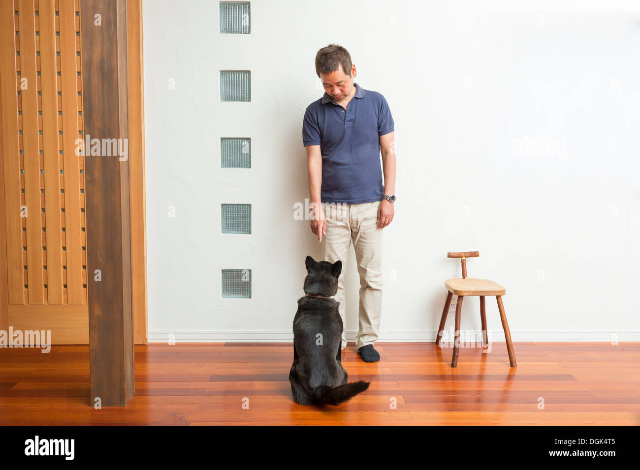 Man training his pet dog - Stock Image