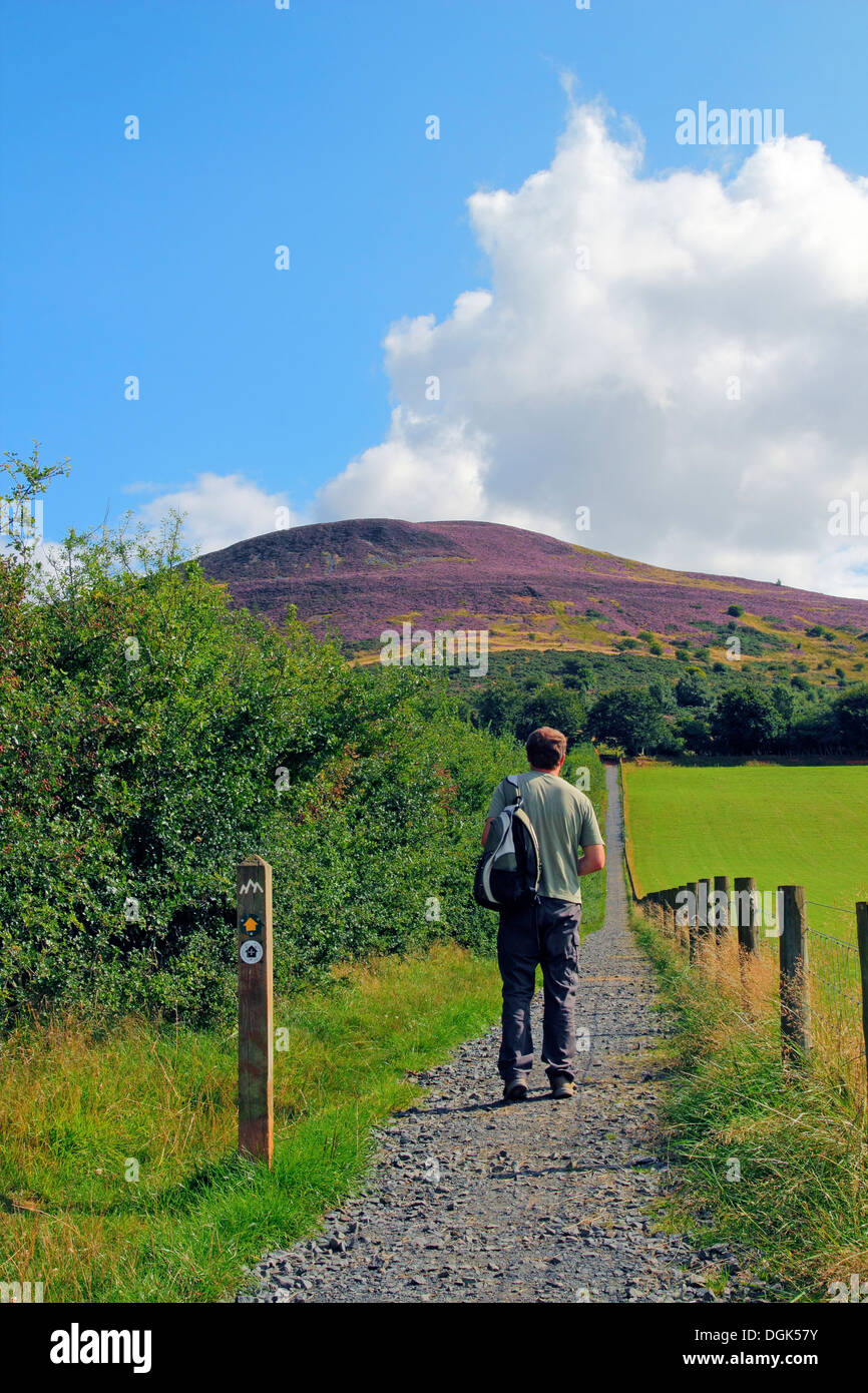 Caucasain Man Walking the St Cuthbert's Way Towards the Eildon Hills, Borders, Scotland, UK MODEL RELEASED - Stock Image