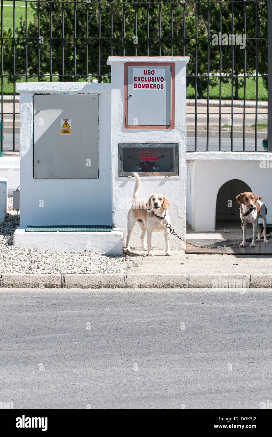 European sniffer dogs at a road checkpoint awaiting to be put to work. - Stock Image