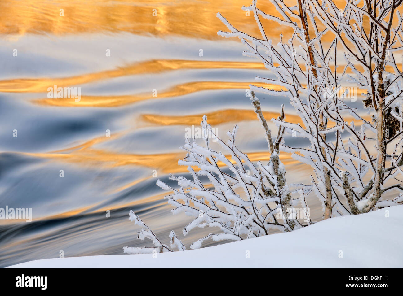 Open water of Wanapitei River with frosted trees in winter Wanup Ontario Canada - Stock Image