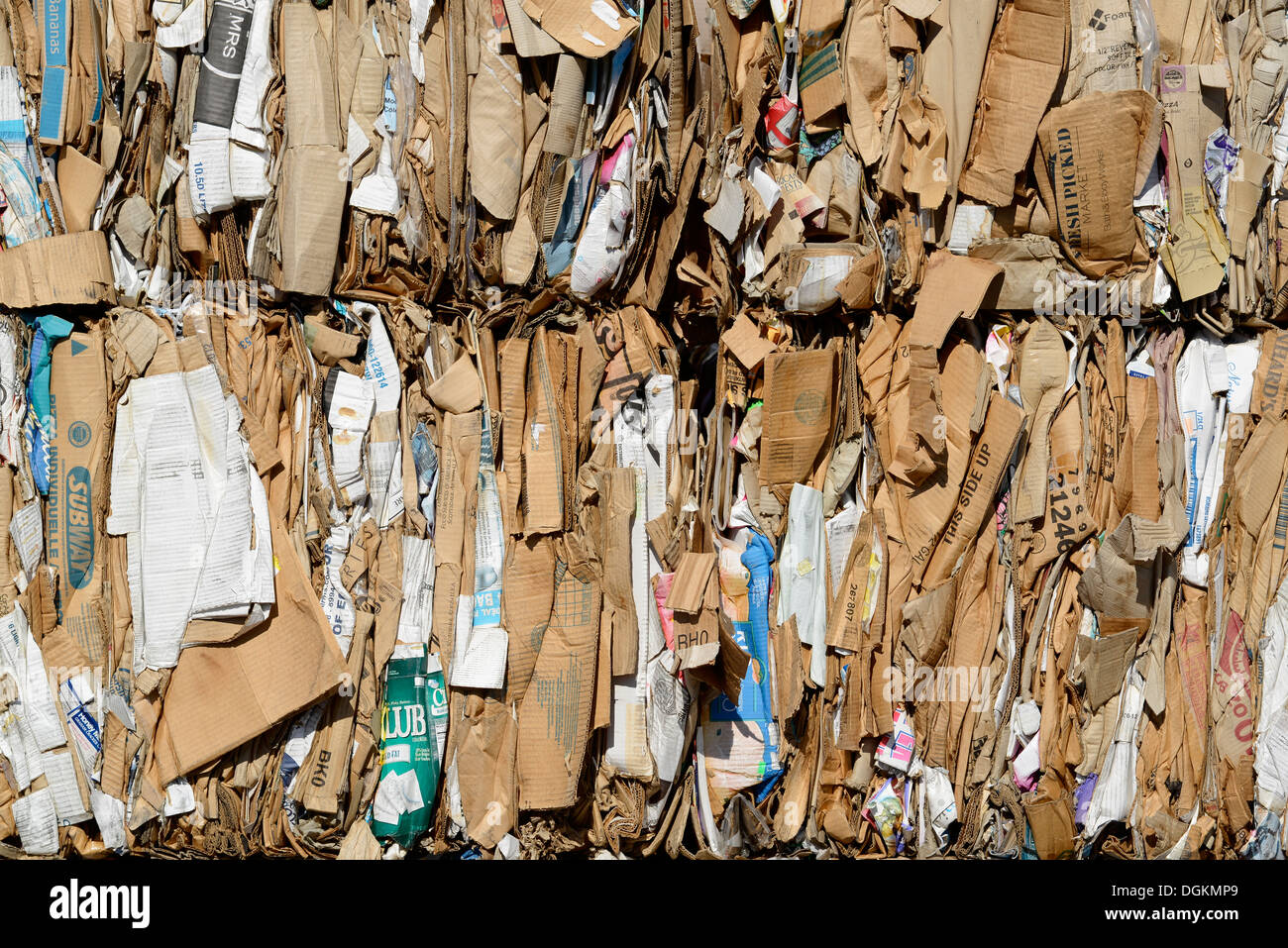 Bales of cardboard at the recycling collection facility in Enterprise, Oregon. - Stock Image