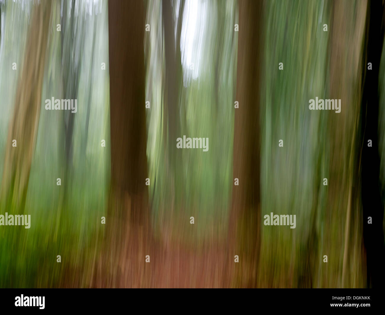 Abstract image of rain forest under story - Stock Image