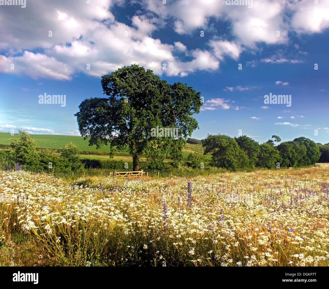 A view across a meadow in Cheshire. - Stock Image