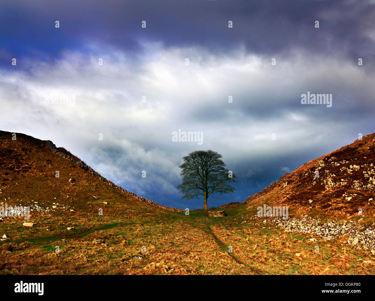 A view of Sycamore Gap in Hadrian's Wall. Stock Photo