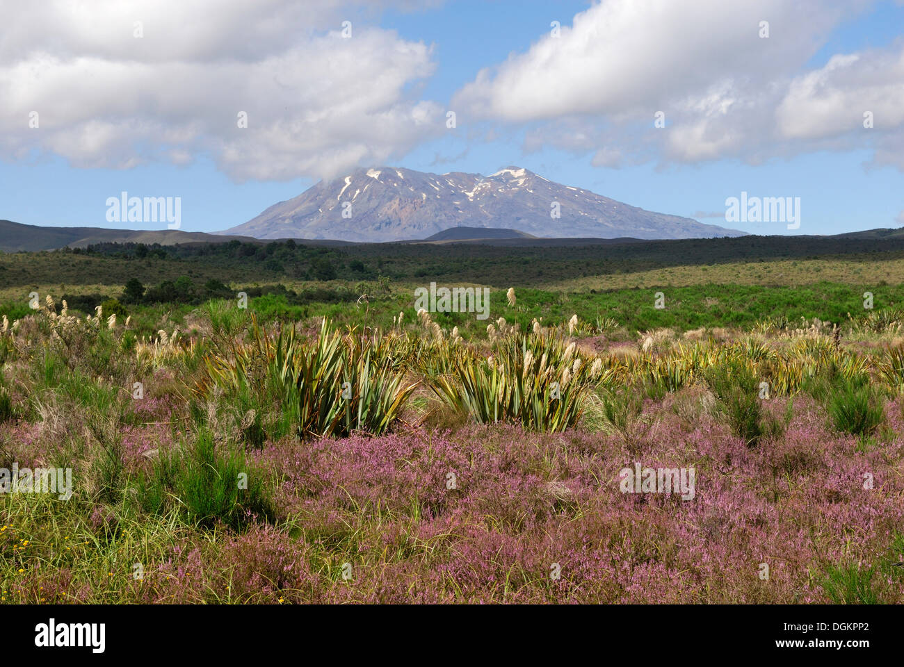 Mount Ruapehu seen from State Highway 47, North Island, New Zealand - Stock Image