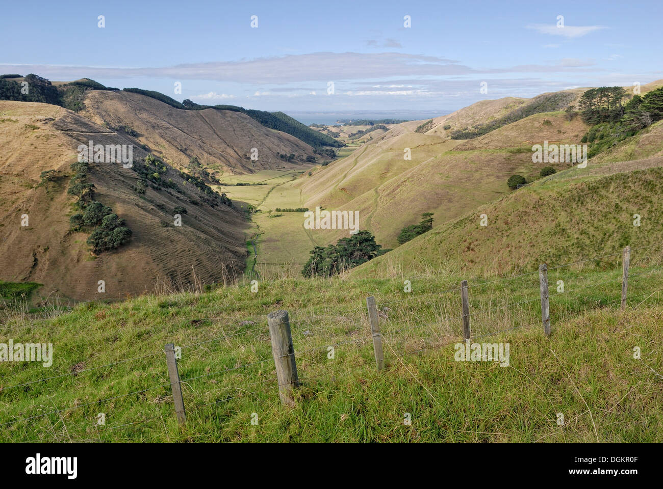 Valley and pastures on the Lees Gully Road, Manukau Peninsula, North Island, New Zealand - Stock Image