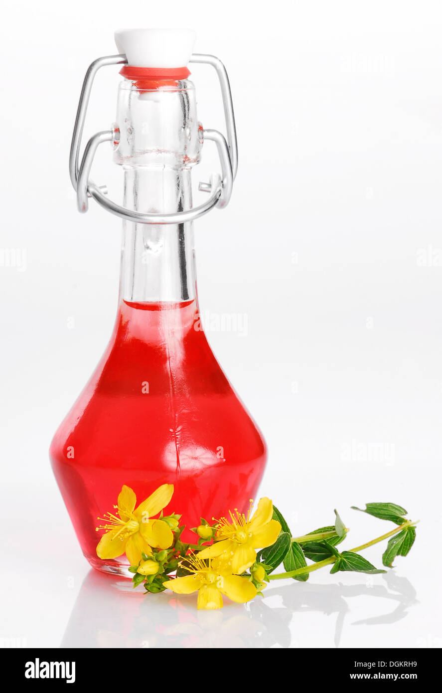 St. John's wort oil with St. John's wort, Tipton's Weed, Chase-devil or Klamath weed (Hypericum perforatum), medicinal plant - Stock Image