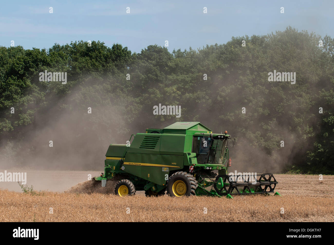 Combine harvester during the grain harvest, generating a lot of dust, North Rhine-Westphalia, PublicGround - Stock Image