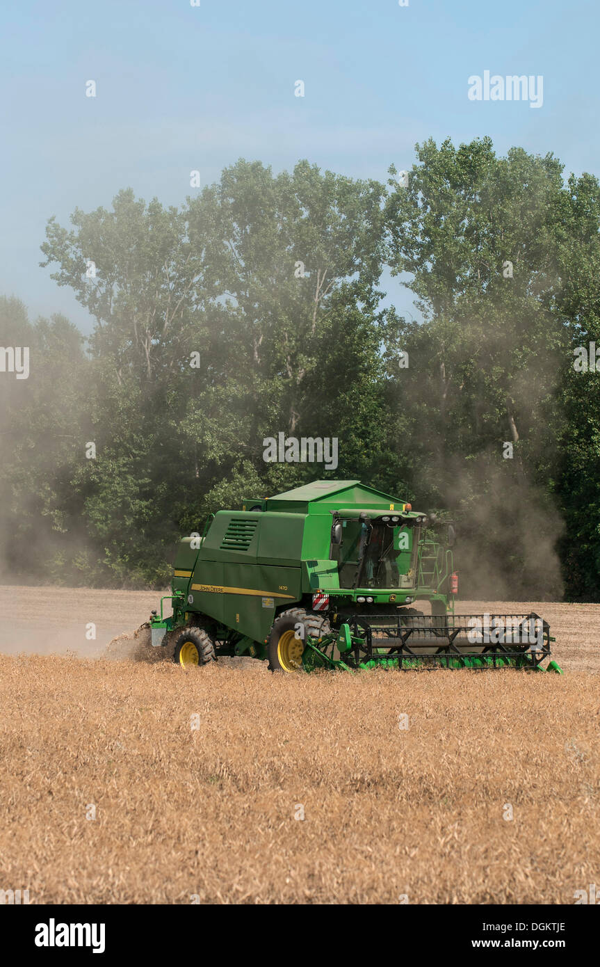 Combined harvester harvesting cereals, severe dust, PublicGround - Stock Image
