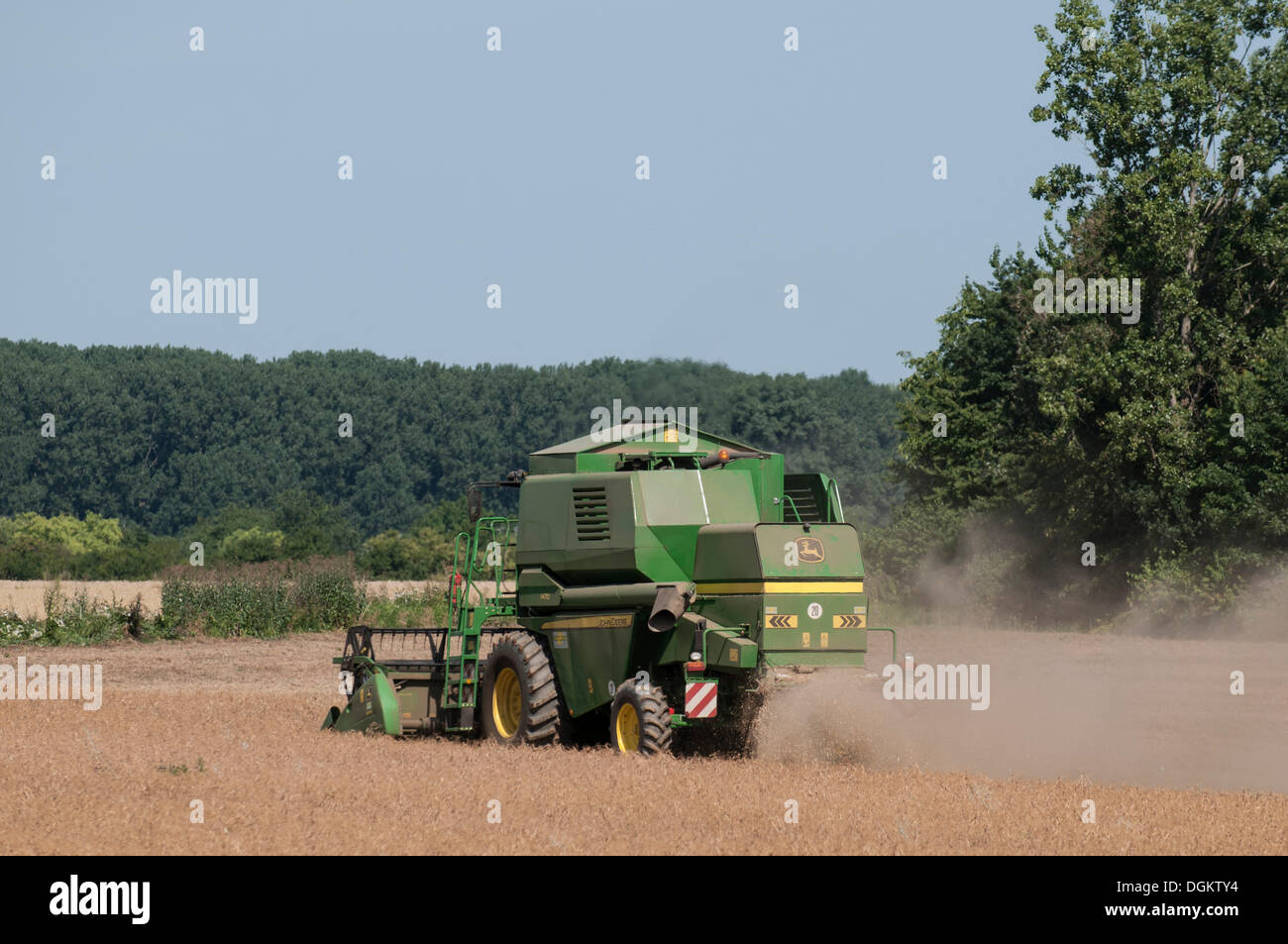 Harvester in wheat field, grain harvest, dust, Bonn, North Rhine-Westphalia, PublicGround - Stock Image