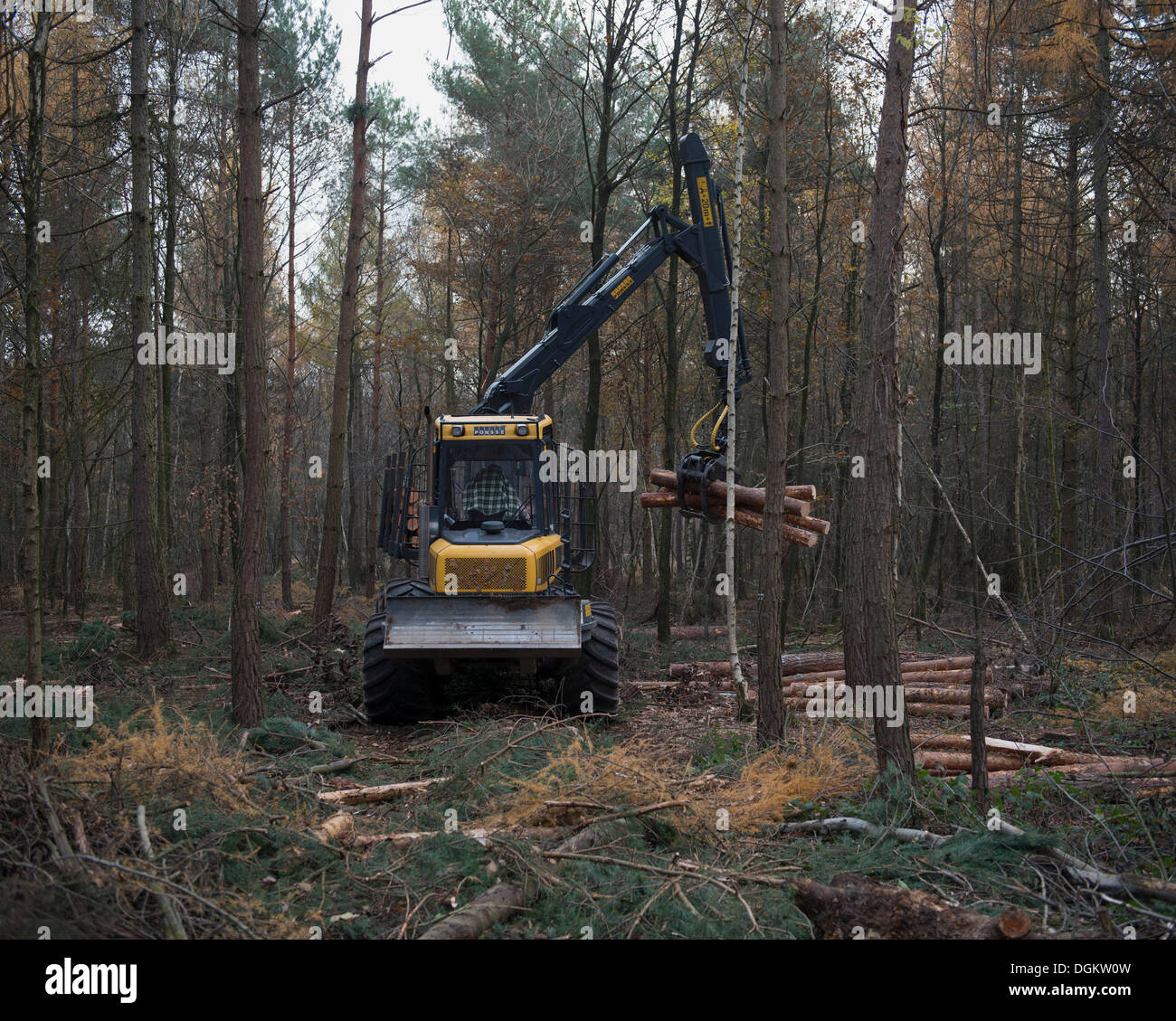 Forestry forwarder harvesting timber, working in a rough forest, Bonn, Rhineland, North Rhine-Westphalia, Germany - Stock Image